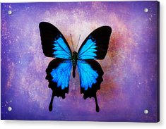 Blue Butterfly Dreams Acrylic Print