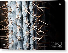 Acrylic Print featuring the photograph Blue Cactus by John Wadleigh