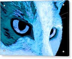 Blue Cat Face Acrylic Print by Ann Powell