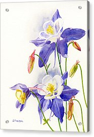 Blue Columbine Blossoms Acrylic Print by Sharon Freeman