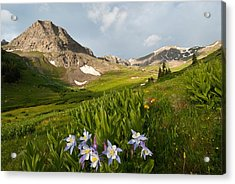 Handie's Peak And Blue Columbine On A Summer Morning Acrylic Print
