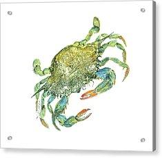 Blue Crab Acrylic Print by Nancy Gorr