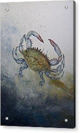 Blue Crab Print Acrylic Print by Nancy Gorr