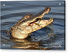 Acrylic Print featuring the photograph Blue Crab Tar-tar by Kathy Baccari