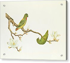 Blue Crowned Parakeet Hannging On A Magnolia Branch Acrylic Print