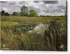 Blue Cypress Wetlands Acrylic Print