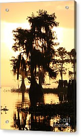 Acrylic Print featuring the photograph Blue Cypress Yellow Light by Paul Rebmann