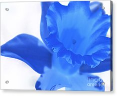 Acrylic Print featuring the photograph Blue Daffodil by Andy Prendy