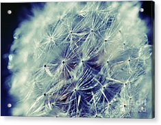 Acrylic Print featuring the photograph Blue Dandy by Mindy Bench