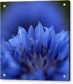 Blue Day I Acrylic Print