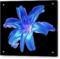 Acrylic Print featuring the photograph Blue Day Lily #2 by Jim Whalen
