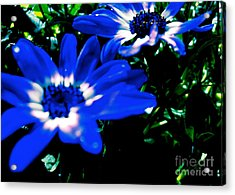 Acrylic Print featuring the photograph Blue Daze by Cathy Dee Janes