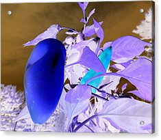 Acrylic Print featuring the photograph Blue Delight by Mike Breau
