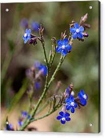 Acrylic Print featuring the photograph Blue Delight by Uri Baruch