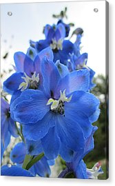 Blue Delphinium Rising Acrylic Print by MTBobbins Photography