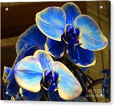 Blue Diamond Orchids Acrylic Print by Patricia Januszkiewicz