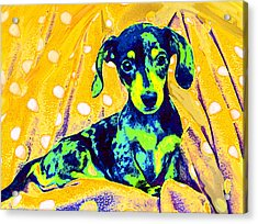 Blue Doxie Acrylic Print by Jane Schnetlage