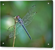 Acrylic Print featuring the photograph Blue Dragonfly by Linda Brown
