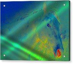 Blue Eyed Horse Acrylic Print by Ernestine Manowarda