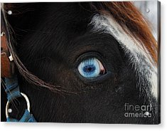 Blue Eyed Horse Acrylic Print