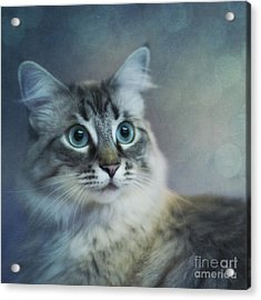 Blue Eyed Queen Acrylic Print by Priska Wettstein