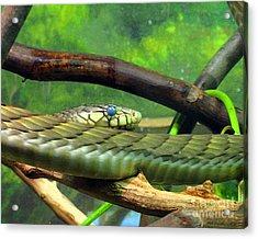 Blue Eyed Snake Acrylic Print by Patricia Januszkiewicz