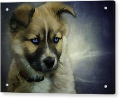 Blue Eyes Acrylic Print by Jacque The Muse Photography
