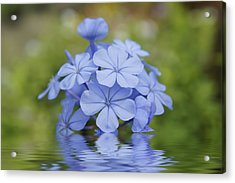 Blue Flowers Acrylic Print by Aged Pixel