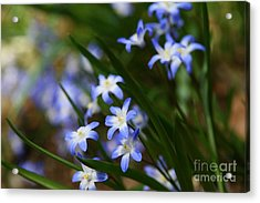 Blue For You Acrylic Print by Neal Eslinger