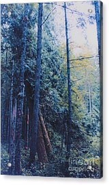 Blue Forest By Jrr Acrylic Print by First Star Art