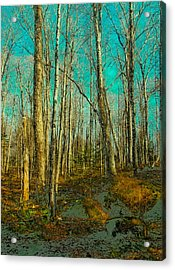 Blue Forest Acrylic Print by David Patterson