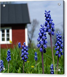 Acrylic Print featuring the photograph Blue Garden Flowers by Kennerth and Birgitta Kullman