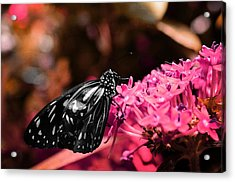 Blue Glassy Tiger Butterfly Acrylic Print by Marianna Mills