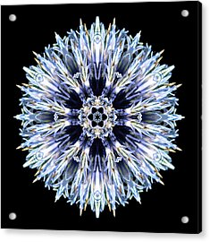 Acrylic Print featuring the photograph Blue Globe Thistle Flower Mandala by David J Bookbinder