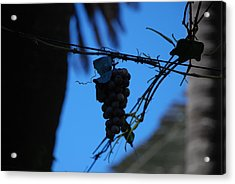 Blue Grapes Acrylic Print by Dany Lison