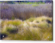 Blue Grass Acrylic Print by Paula Porterfield-Izzo