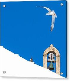 Blue Gull Acrylic Print