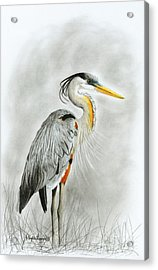 Blue Heron 3 Acrylic Print by Phyllis Howard