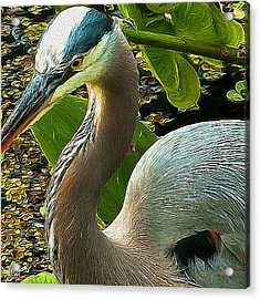 Blue Heron Addict Acrylic Print by Jim Pavelle