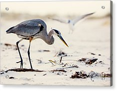Blue Heron At The Beach Acrylic Print by Joan McCool