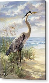 Blue Heron Deux Acrylic Print by Laurie Hein