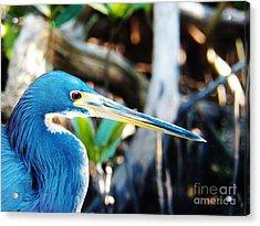 Blue Heron Acrylic Print by Judy Via-Wolff