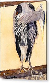 Blue Heron - Left Acrylic Print by Sandy Linden