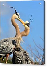 Blue Heron Love Acrylic Print