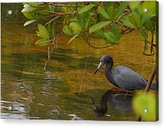 Blue Heron Acrylic Print by Mark Russell