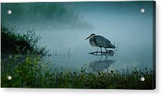Blue Heron Morning Acrylic Print