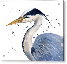 Blue Heron Painting Acrylic Print by Alison Fennell