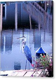 Blue Heron Reflections Acrylic Print