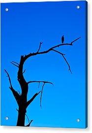 Blue Heron Silhouette Acrylic Print