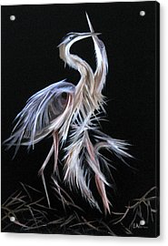 Blue Herons Mating Dance Acrylic Print